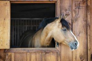 Best Horse Stall Bedding