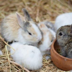 hemp bedding for rabbits