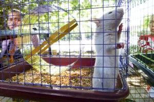 hemp bedding for rats